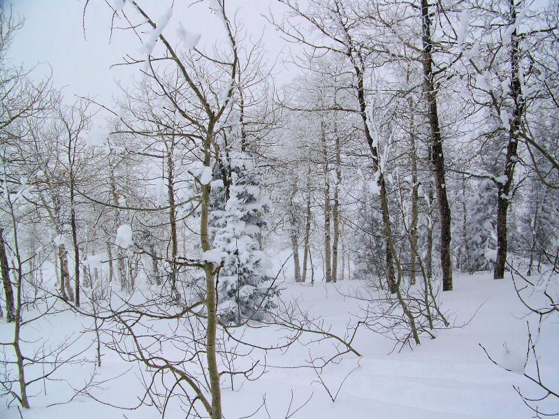 Powder Mountain - in the Aspens at the top of Cobabe Canyon