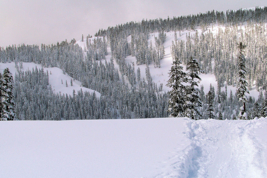 Homewood - The approach to Lake Louise run